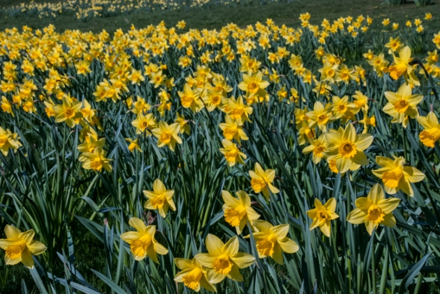 Spring flowers, Devon